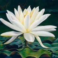 Be Boundless with Bound Lotus Kriya