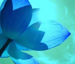 sun-blue-lotus