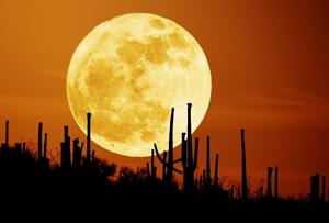 desert-moon-300