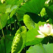 Kundalini Yoga for Regeneration with Jai Kartar